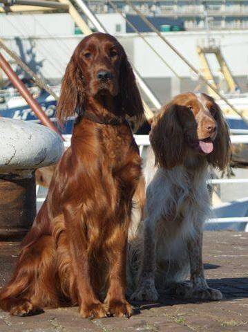 De huishonden van de winkel in Soesterberg